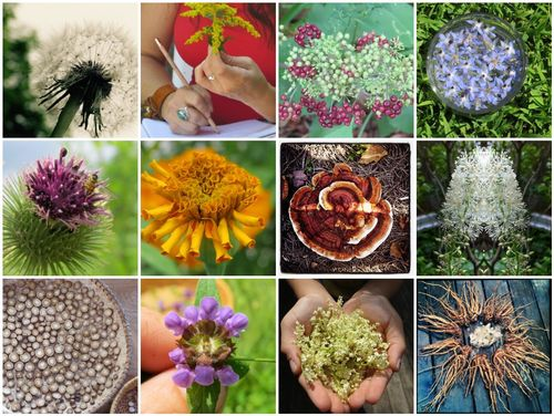 Plant Observation and Study
